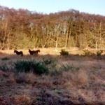 Gilhams Horses2